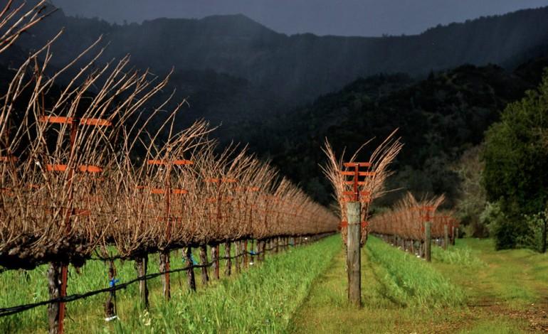 Pinault, shopping di vini in Napa Valley