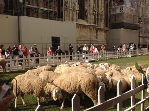 Le pecore di Woolmark
