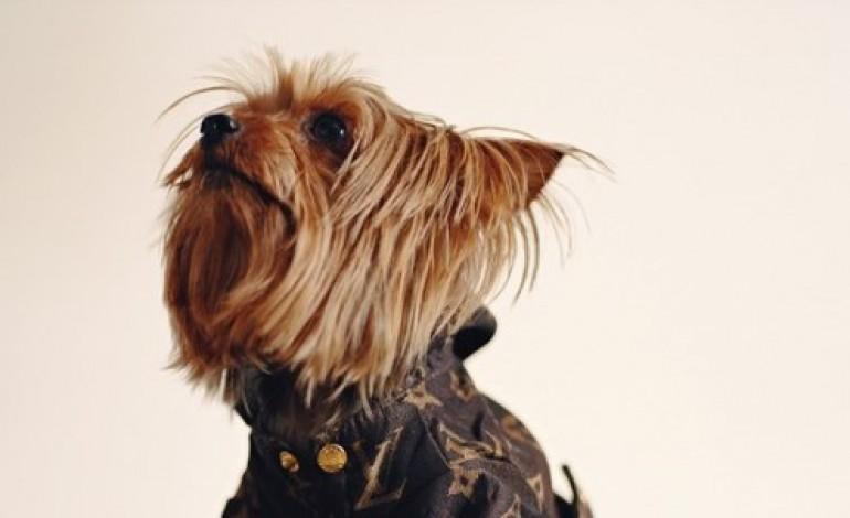 Londra celebra una Couture da cani