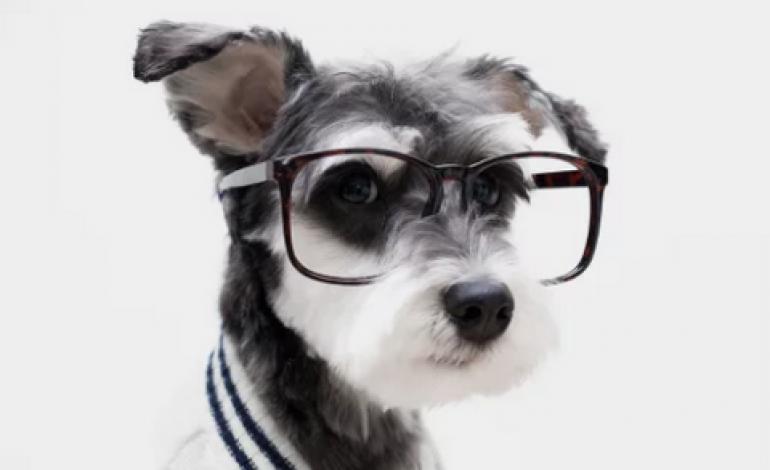 Cani-modello per l'e-commerce Mr Porter