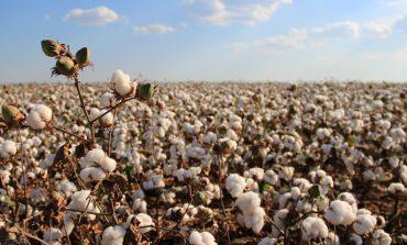 Cotone sostenibile: Adidas, Ikea, H&M sul podio