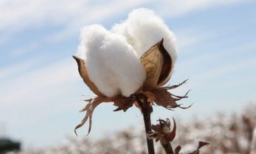 Cotone, gli Usa bloccano l'import dallo Xinjiang
