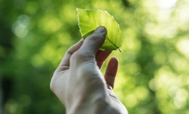 Cnmi lancia un master sulla sostenibilità