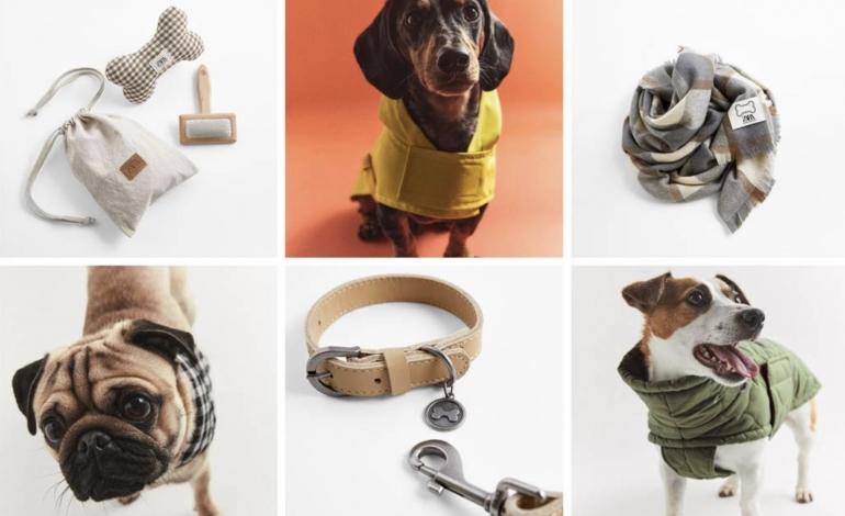 Zara fiuta il business del fashion per 'Fido'